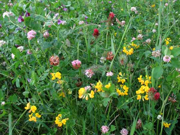Click to enlarge a wildflower meadow